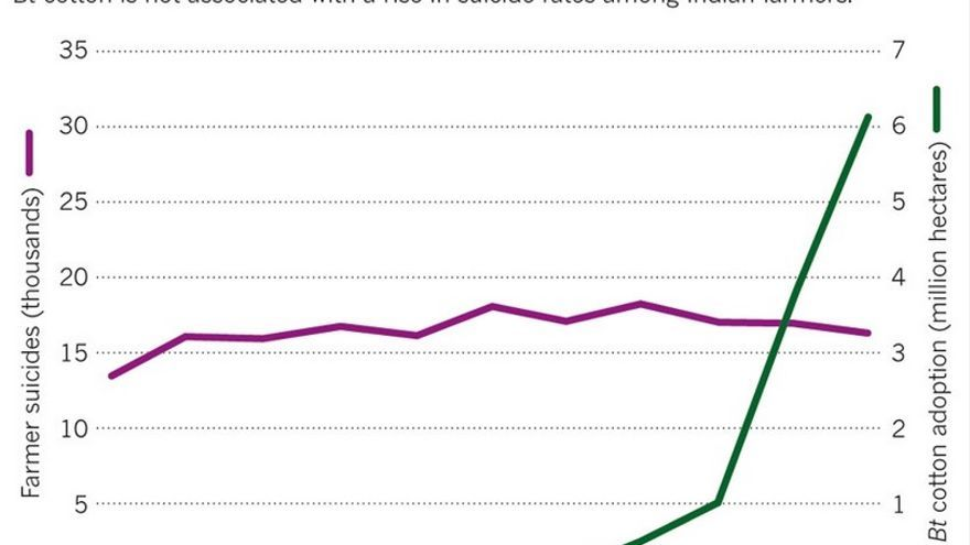 Gráfico de la revista Nature sobre la tendencia de suicidios de granjeros en india (en miles), en morado, y la de los cultibos de algodón bt, en verde, a partir de su introducción en 2002. / Fuente de los datos: International Food Policy Research Institute.