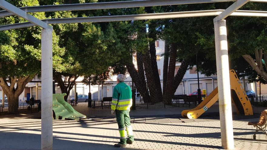 Sermubeniel y el Ayuntamiento de Beniel inician una campaña de mantenimiento de los Ficus del municipio