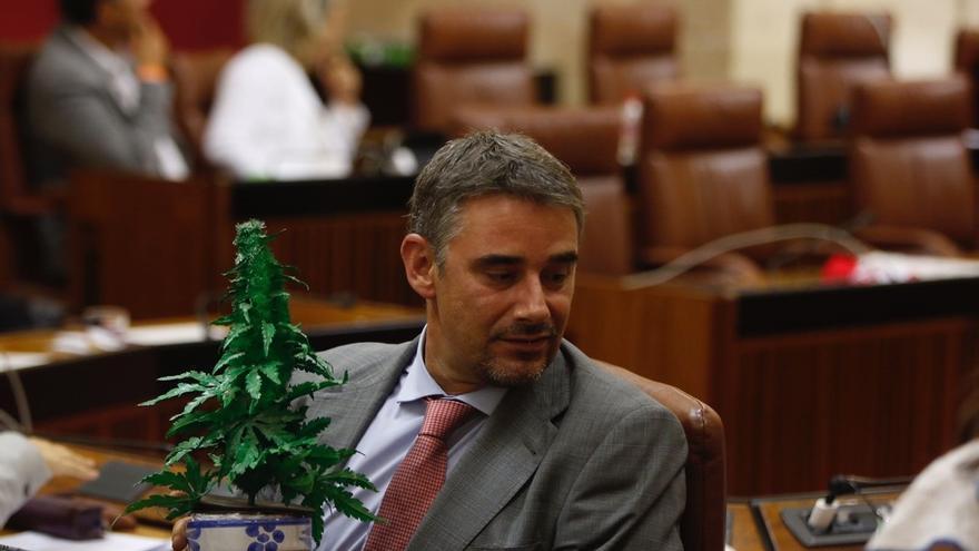 El Parlamento rechaza pedir la regulación del cannabis en sus usos medicinales, terapéuticos y de ocio
