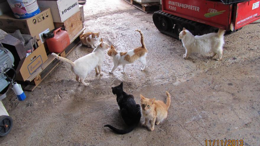 Gatos domésticos en una finca de La Palma.