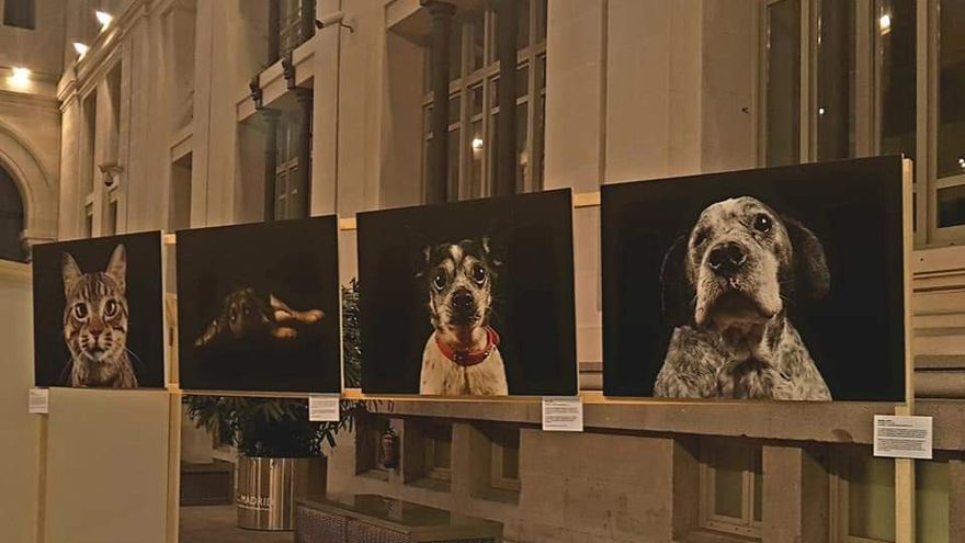 Exposición de Fotopets, proyecto fotográfico solidario para difusión de animales abandonados. Palacio de Cristal del Ayuntamiento de Madrid, fiestas de San Antón, 2019