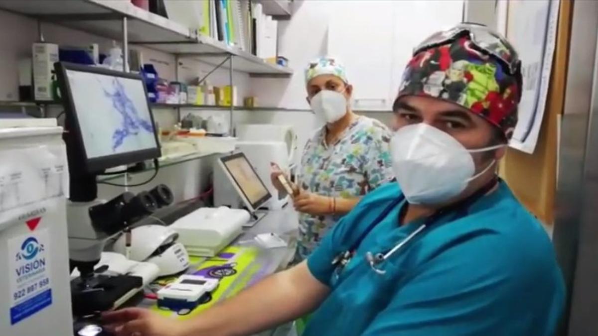 Captura del vídeo difundido por el Colegio de Veterinarios de Canarias.