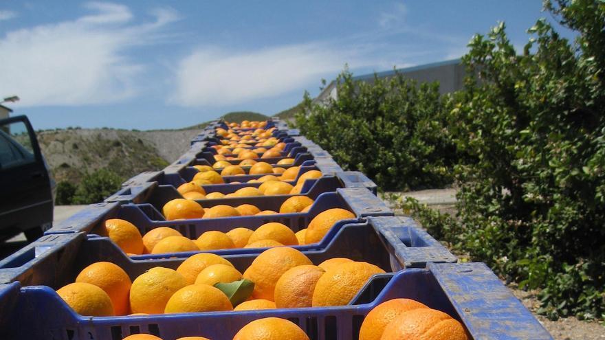 Aumentan en el primer trimestre del año un 7,2% las exportaciones y las ventas alcanzan los 1.450 millones