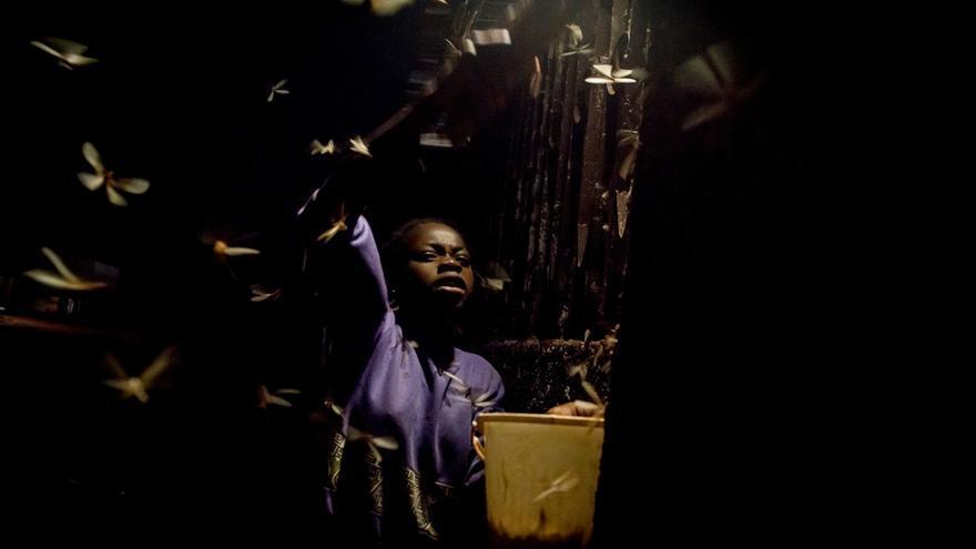 Un niño recoge termitas en las calles de Berberati