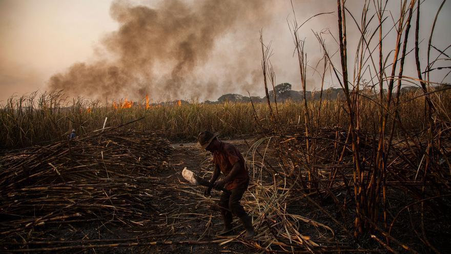 Trabajador cortando caña de azúcar en las plantaciones de Guatemala. Fotografía: Víctor Peña