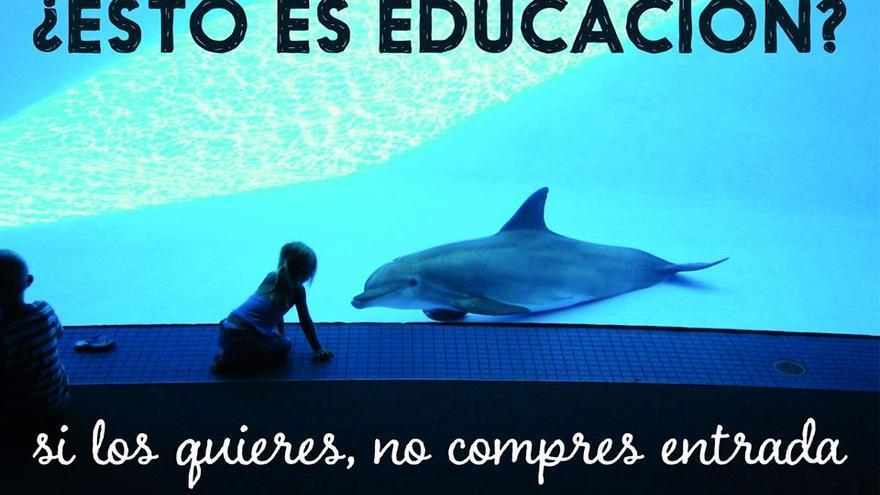 Uno de los carteles con los que La Dolphin Connection llama a protestar contra la cautividad de cetáceos