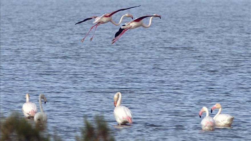 Hallan sustancias contaminantes en los huevos de aves del Parque de Doñana