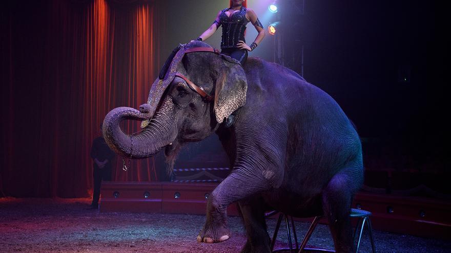 Elefante en el Circo Mundial, en 2016. Foto: Tras los Muros