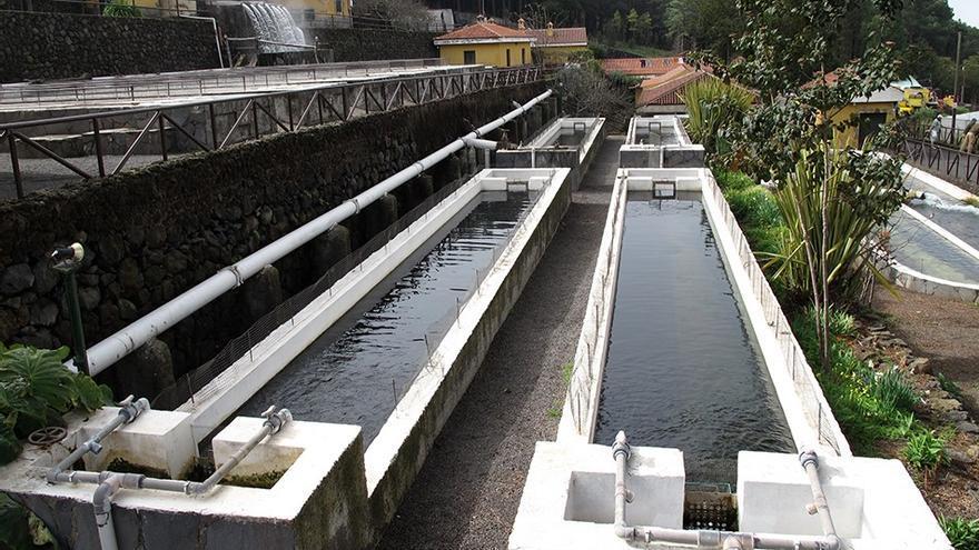 Piscifactoría de Aguamansa, en La Orotava, instalación que gestiona el Cabildo de Tenerife