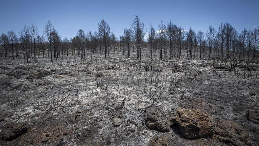 Varias brigadas continúan trabajando en el incendio de Carcaixent, ya estabilizado