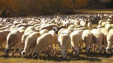 Carta a la consejera de Agricultura y Ganadería de Andalucía