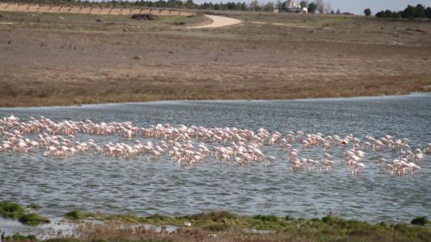 Reserva Natural de la Mancha Húmeda