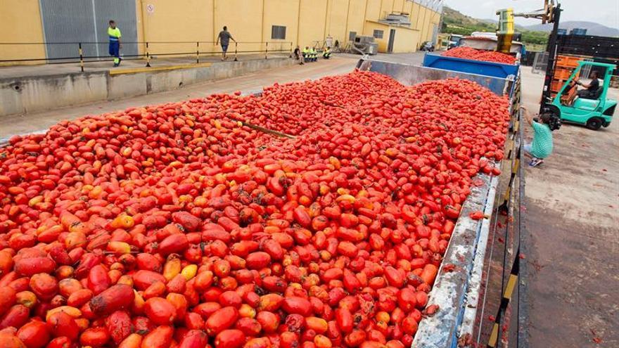 Buñol lanza 160 toneladas de tomate contra la violencia machista y homófoba