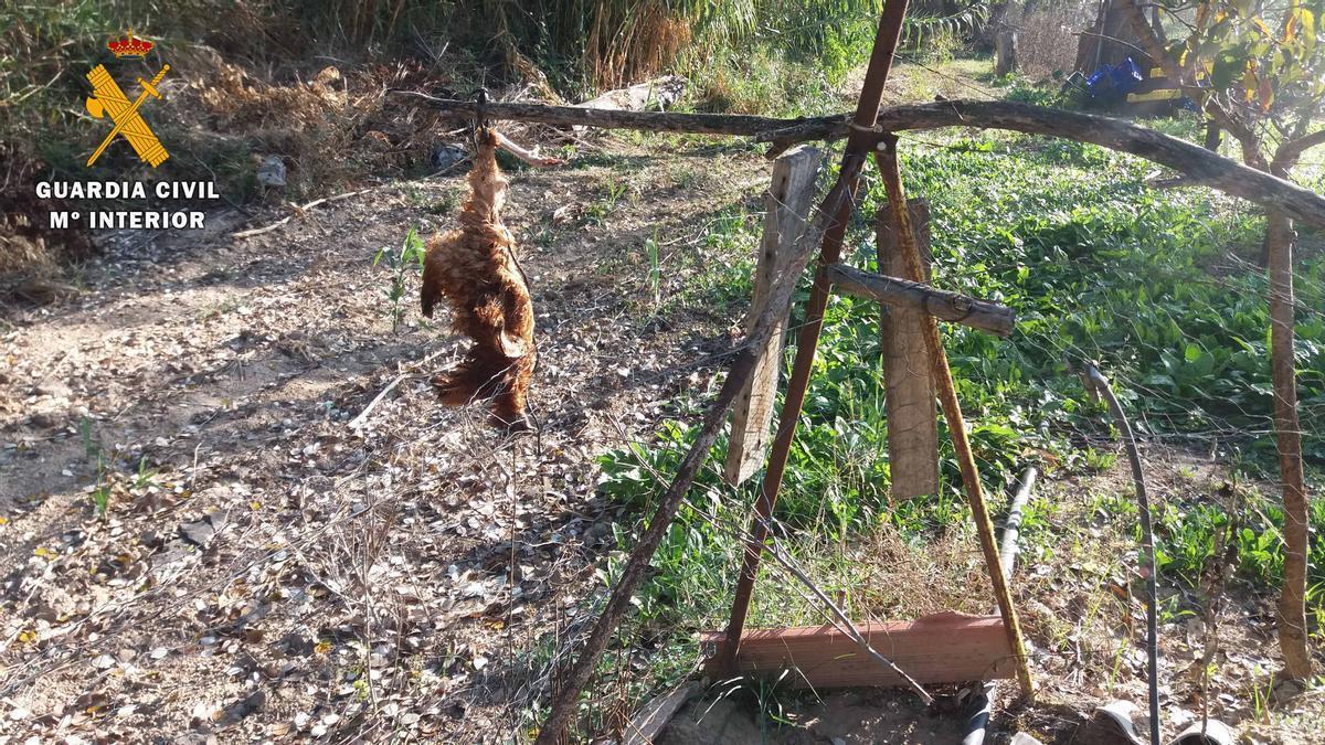 Lazo ilegal donde fue capturado el lince