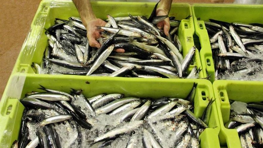Preocupación ante el cierre provisional de la pesquería de la anchoa