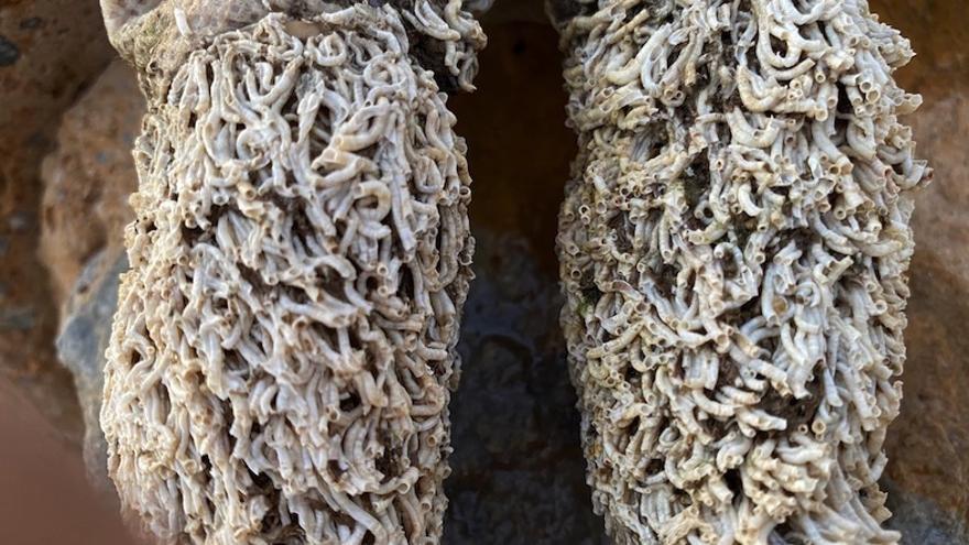 Las piernas de la muñeca con los anélidos hallada en el balneario La Encarnación de Los Alcázares, Murcia / ISABEL RUBIO