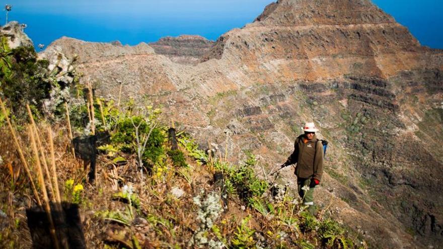 Fotografía facilitada por el proyecto Life Guguy, de las labores de restauración forestal en la Reserva Natural Especial de Güigüi (Gran Canaria)