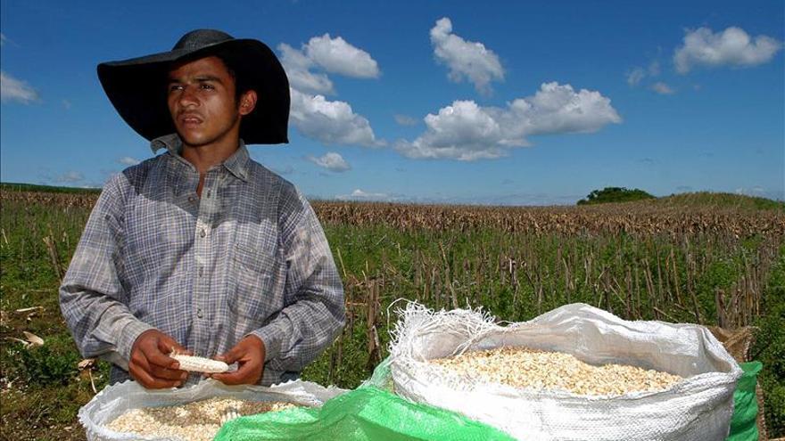 La FAO dice que el fomento de la agricultura familiar en América Latina requiere un enfoque transversal