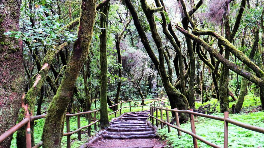 Bosque de Garajonay, espacio acreditados con la Carta Europea de Turismo Sostenible