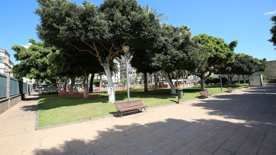 Árboles en Las Palmas de Gran Canaria.