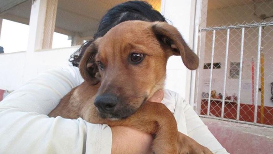 Animal recogido en la perrera municipal del Ayuntamiento de Cáceres.