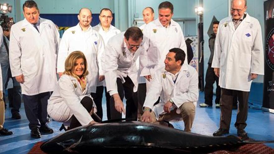 Mariano Rajoy, Juanma Moreno, Fátima Báñez, entre otras autoridades, observan un atún antes de que los operarios de la empresa Andaluza de Distribución y Alimentación Román y Martos realicen un ronqueo
