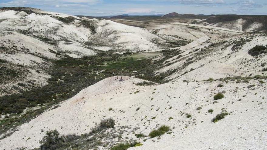 Robles y hayas fósiles cuentan historia familiar en la Patagonia