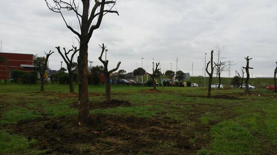 Los árboles desmochados en el parque de La Marga han sido transplantados en La Albericia, junto a un nuevo restaurante de comida rápida.