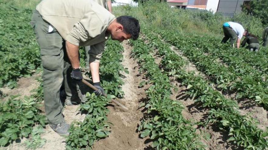 Un alumno del taller de @prendizext 'Solanum´14' // Solanum
