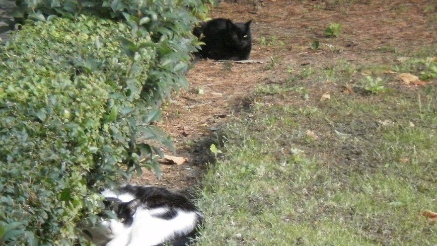 Gatos de una colonia felina en el distrito de Salamanca (Madrid). Foto: S.P.A.P.