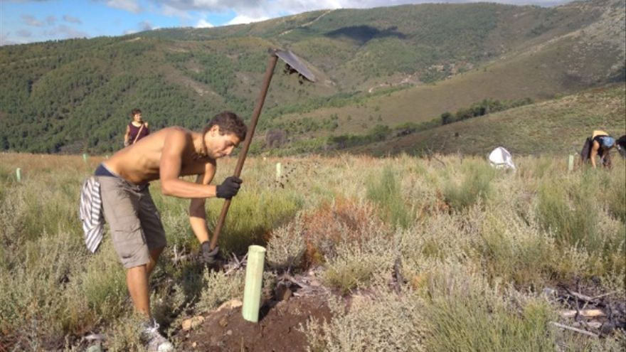 Trabajan con la convicción de hacer bosques más sostenibles, variados, a modo de mosaicos