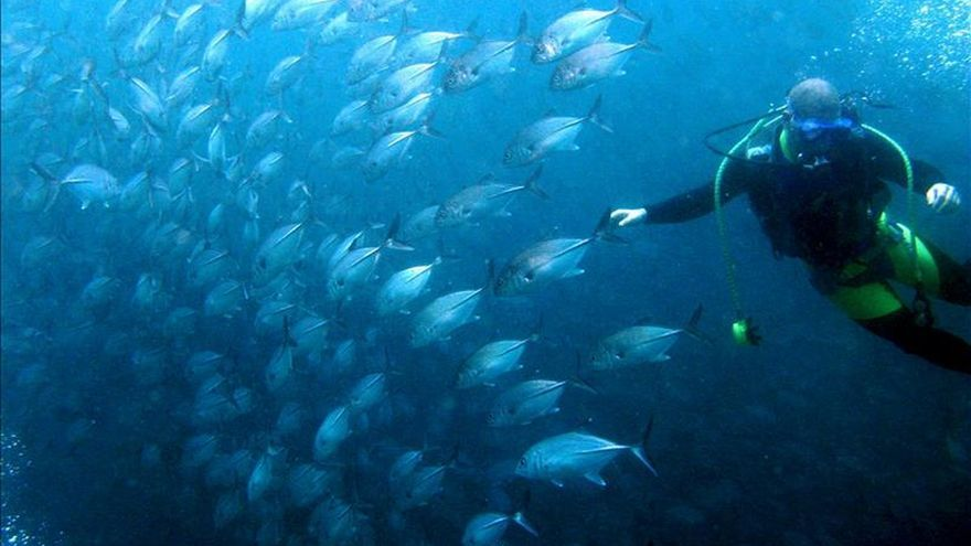 Los remolinos separan en los océanos las aguas ricas y pobres en oxígeno