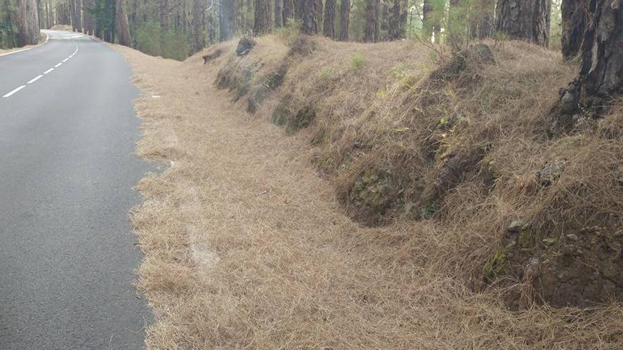 Acumulación de pinocha en una vía que lleva al Teide