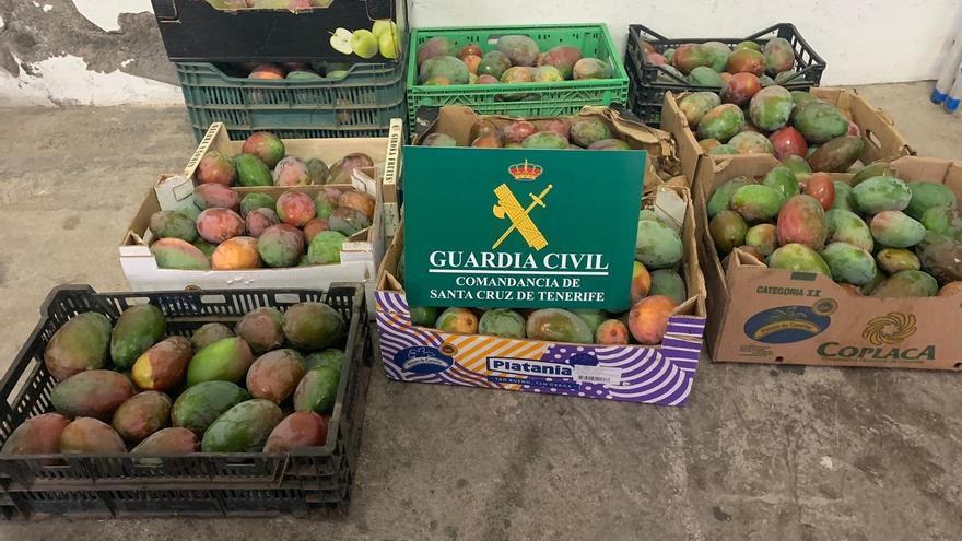 Cajas con mangas robadas en una finca en Tenerife