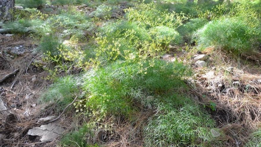 Descubren una especie vegetal única en el Parque Natural de Cazorla, Segura y Las Villas, junto al río Guadalentín