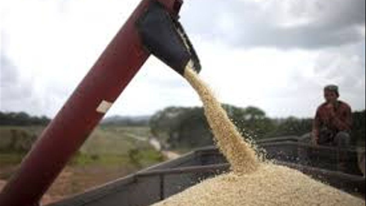 El mercado de granos en la mira de la justicia por los casos de contrabando.