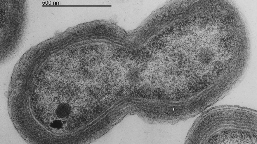 Bacteria Prochlorococcus.