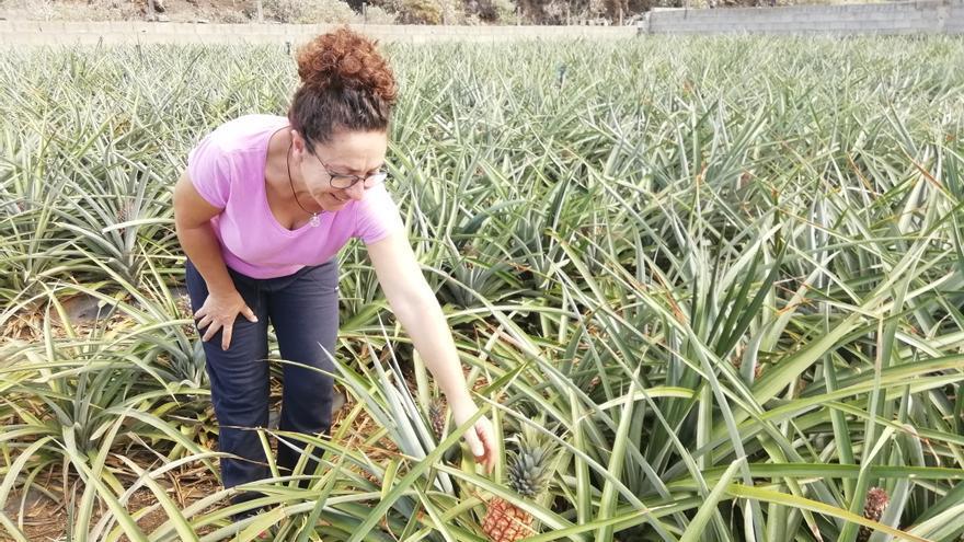 Natalia Quintero en su plantación de piñas