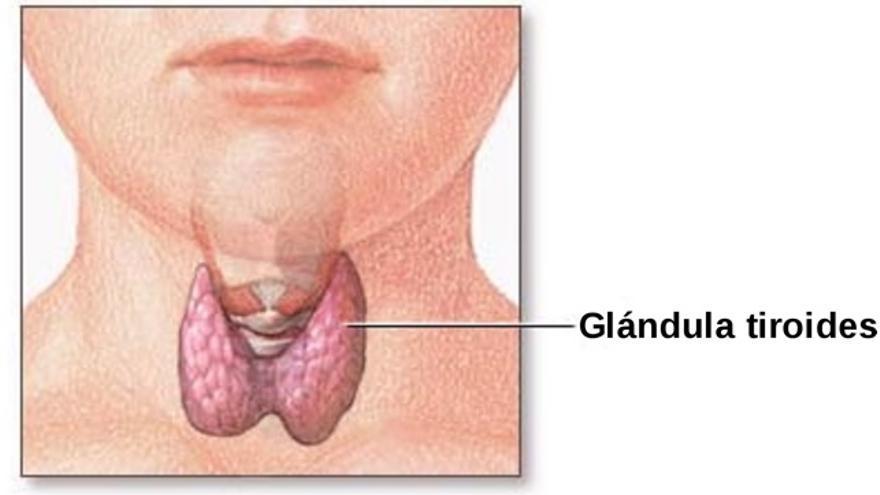 Diferencia entre hiper e hipotiroidismo: cómo identificarlos por sus síntomas