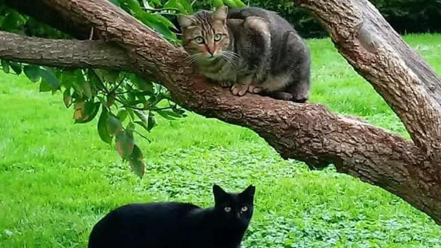 AGAR (Asociación de Amigos de los Gatos del Retiro)