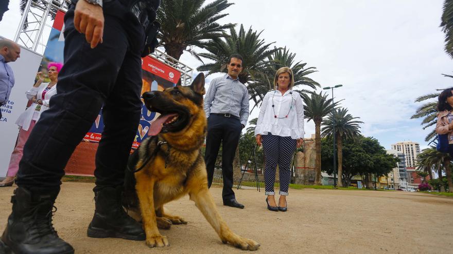El Ayuntamiento de Las Palmas de Gran Canaria pone en marcha la primera carrera solidaria Perro-Amo para recaudar fondos para el albergue de animales
