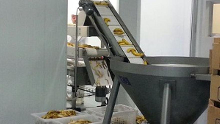 Imagen de archivo de las primeras pruebas de la maquinaria de la planta de transformación agroalimentaria del plátano, el denominado proyecto 'Frutín La Palma', realizadas en octubre de 2013.