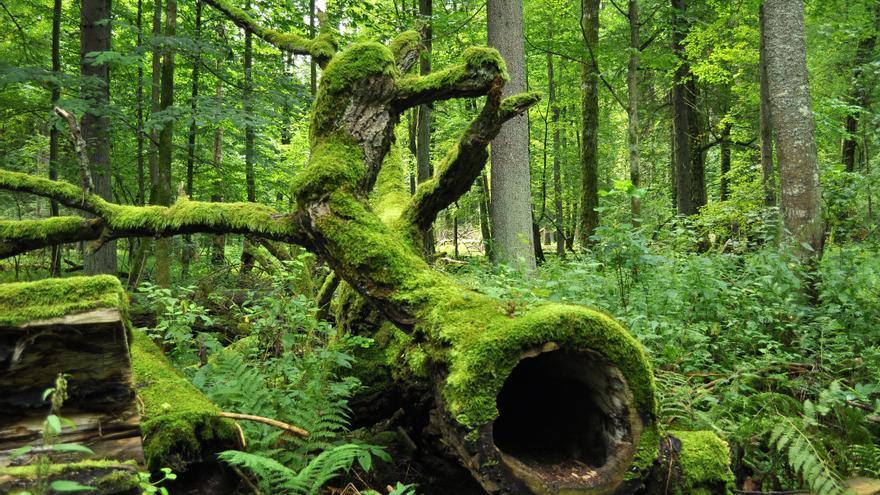 Parque Nacional Bialowieza.