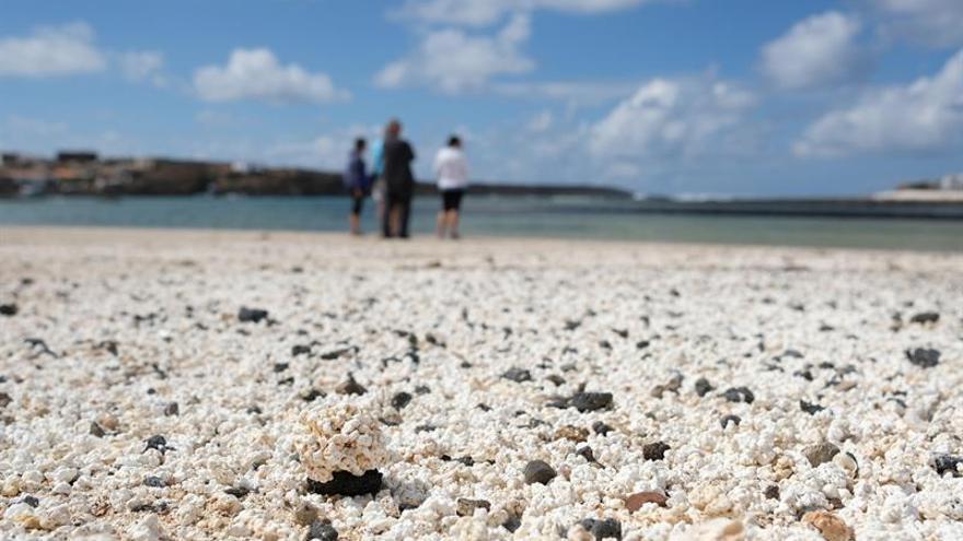 Los rodolitos (algas calcáreas) que han hecho famosas a las playas del entorno de Majanicho, en el norte de Fuerteventura.