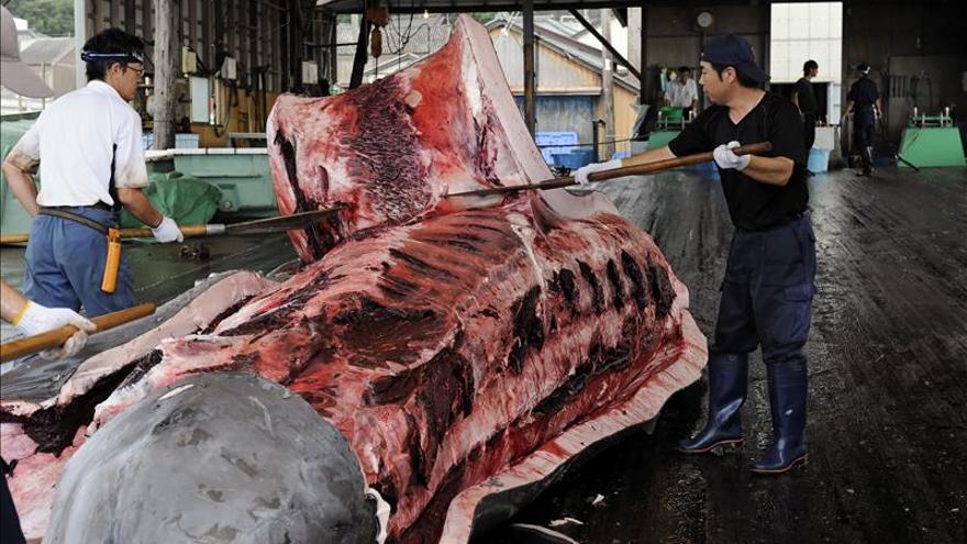 Japón propone reducir su cuota de pesca de ballenas en la Antártida
