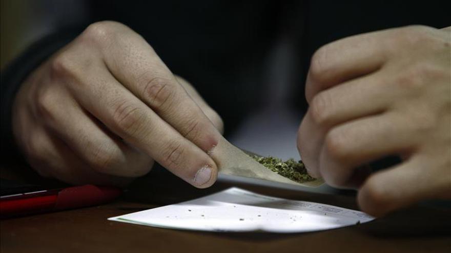 Los productos para el cultivo de marihuana se multiplican en los comercios de Uruguay