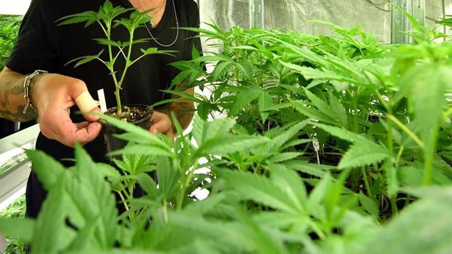 Cae el consumo de cannabis en Madrid y se estabiliza el del resto de drogas