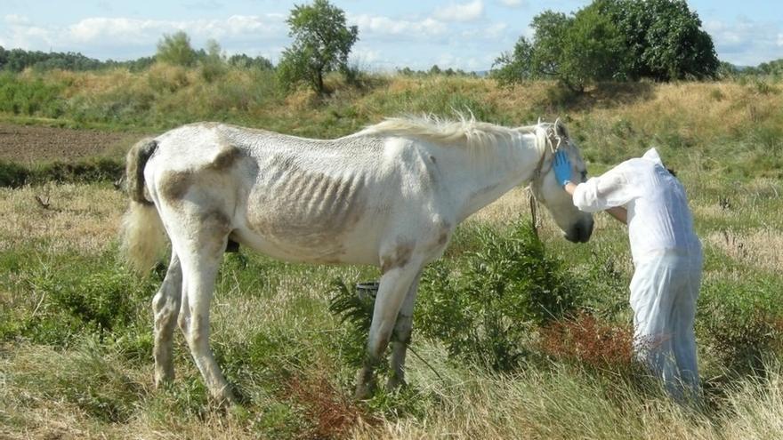 Imputado por abandonar un caballo en Azagra