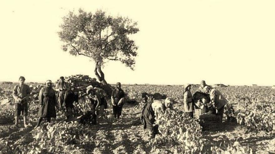 Vendimia en Manzanares a principios del siglo XX