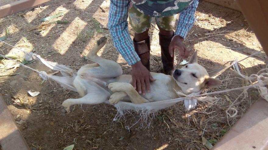 Todos los perros deberían vivir así, como en el refugio del ENP. Foto: Sara Hernández Cofiño.
